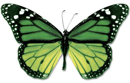 wpid-green-black-butterfly.jpg