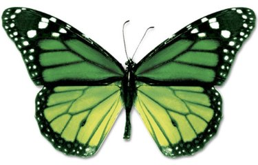 wpid-green-black-butterfly.jpg